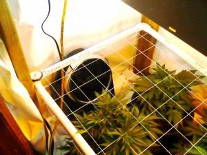 "Ozeri Brezza Oscillating 10"" High Velocity Desk Fan - Quiet Grow Fan"