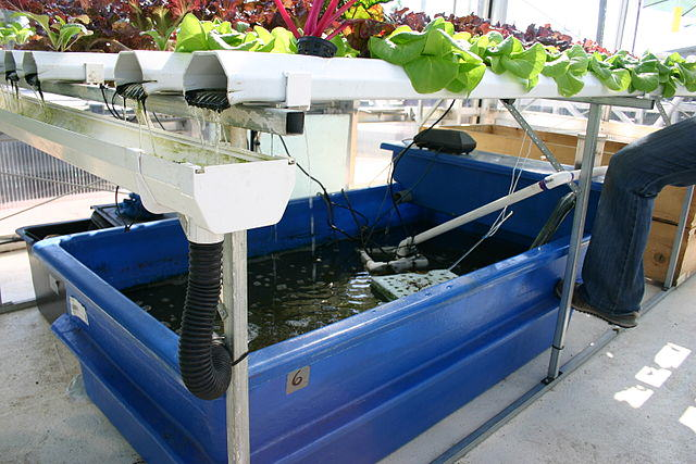 aquaponics and hydroponics working together
