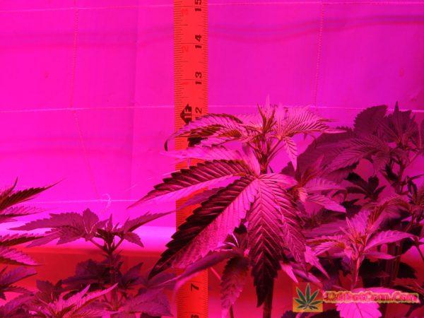 DSCN0235 Week 3 HPS VS LED Comparison