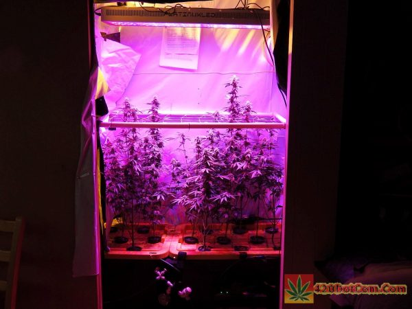 Front view of the Platinum LED side of the grow closet DSCN0367 & LED vs HPS Platinum LED P600 vs 600W HPS Side by Side Grow - How ...
