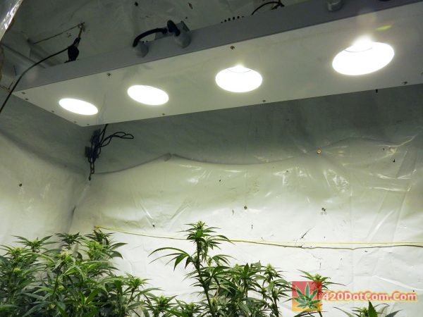 New COB LED grow light from Pacific Light Concepts CXP-250