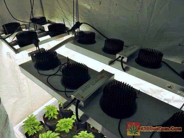Alien Rift under my COB LED setup
