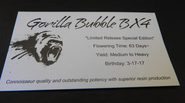 Gorilla Bubble BX4 by Tony's Tortured Beans