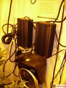 Phantom 600 Watt Digital Ballast Review - My Phantom Digital Ballasts hard at work