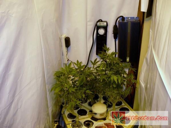 Solis Tek Matrix 1000W Digital Ballast Mounted In My Grow Closet