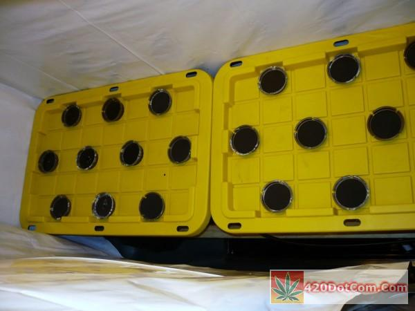 DIY Aeroponics totes with 3 inch net pots