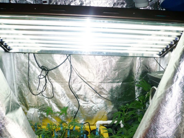 hydrofarm grow light