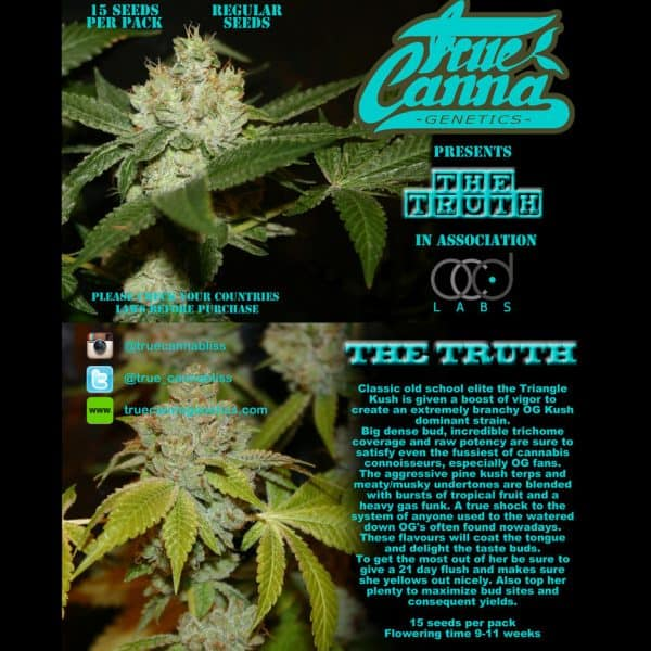 The Truth - Triangle Kush x SFV OG x Chemdog D - True Canna Genetics