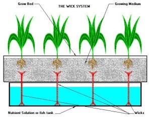 wick system hydroponics